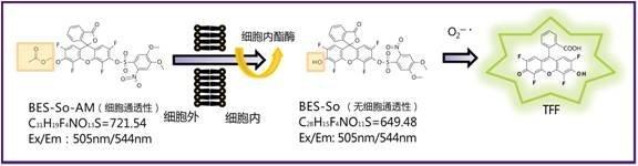 超氧化物特异性荧光探针BES-So(Cell-impermeant)-价格-厂家-供应商-WAKO和光纯药(和光纯药工业株式会社)